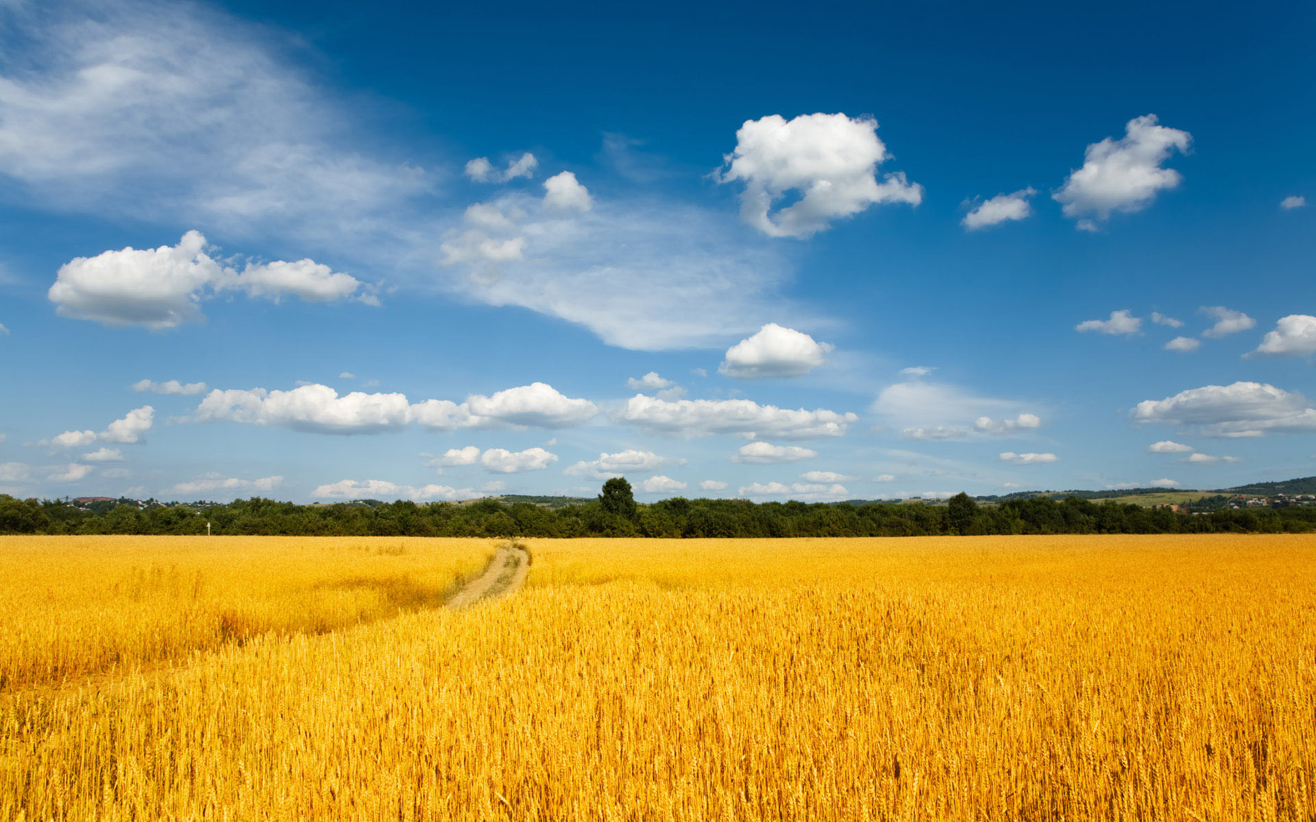 sunny-field-wallpaper-5901.jpg